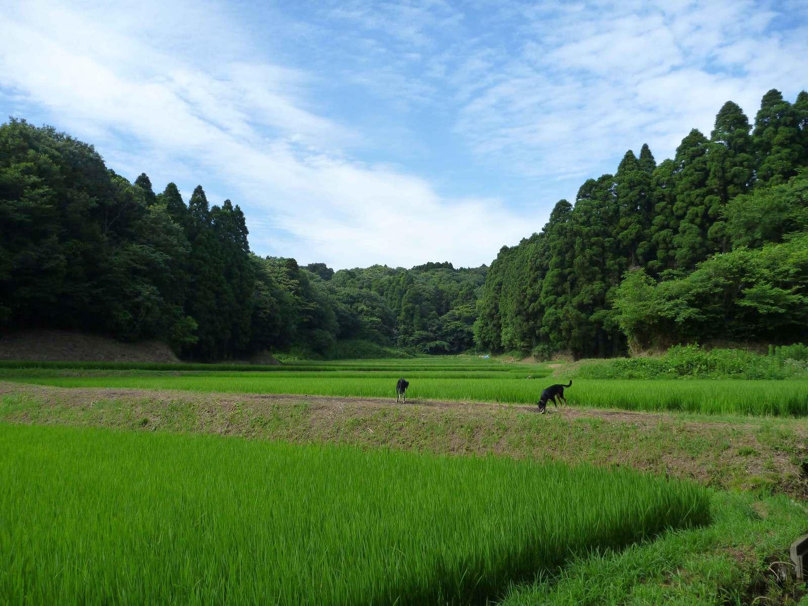 Tsuyuake